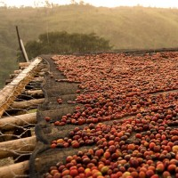 Оur favorite Moplako + 3 new coffees are here!