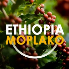 Еthiopia Moplaco - DABOV Specialty Coffee