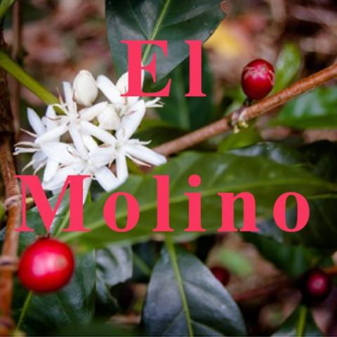 КАФЕ НА МЕСЕЦ ЮЛИ 2015 - Ел Молино 200,8 гр.